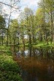 Charca en el bosque Foto de archivo