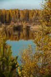 Charca en el fondo del bosque del otoño Fotos de archivo libres de regalías