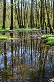Charca en fondo de la naturaleza de la primavera del bosque de la primavera fotografía de archivo