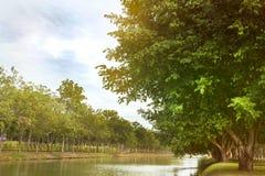 Charca en parque verde Fotografía de archivo