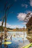 Charca escénica en Maine y los waterlillies Imagen de archivo