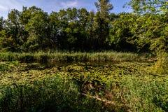Charca grande en el bosque de Lobau Imagenes de archivo