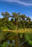 Charca grande en el bosque de Lobau Foto de archivo libre de regalías