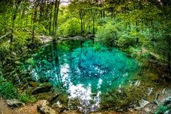 Charca hermosa en el bosque, lago Ochiul Beiului del bosque famoso por ella color increíble del ` s, condado de Caras Severin Fotografía de archivo