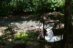 Charca hermosa en un parque con los guijarros cerca del agua foto de archivo libre de regalías