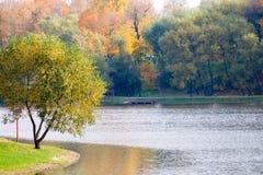 Charca hermosa y árboles amarillos. Fotos de archivo