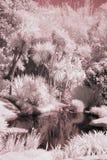 Charca infrarroja Fotografía de archivo libre de regalías