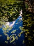 Charca inmóvil reflexiva Fotos de archivo
