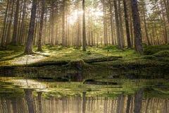 Charca/lago en luz del sol de oro del bosque verde cubierto de musgo antes de la puesta del sol con los rayos del sol que vierten foto de archivo libre de regalías
