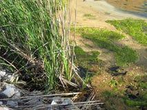 Charca llenada del vegitation Foto de archivo libre de regalías