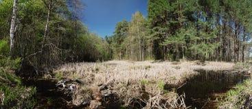 Charca overgrown en un bosque del pino Imagen de archivo libre de regalías