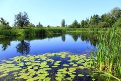 Charca pintoresca con los agua-lirios Lago summer imagen de archivo