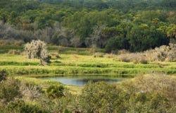Charca reservada en el bosque de la Florida Fotos de archivo