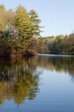 Charca y bosque Imágenes de archivo libres de regalías