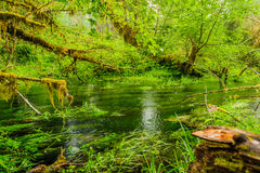 Charca y árboles cubiertos con el musgo en la selva tropical Imagen de archivo libre de regalías