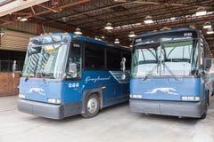 Charci autobusy przy śmiertelnie inToronto, Kanada Zdjęcie Stock