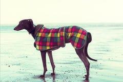 Charcica na plaży, Szkocja fotografia stock
