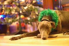 Charcica pies Dekorujący dla bożych narodzeń obrazy stock