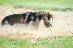 Charcica pies z kaganem w konu zdjęcie stock