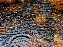 Charco de la lluvia del otoño Imagen de archivo libre de regalías