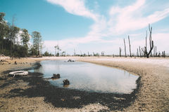 Charco en una playa imagen de archivo