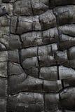 charcoal obraz royalty free
