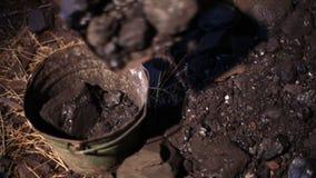 charcoal almacen de video