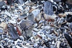 charcoal dla gotować na otwierającym ogień twarde drzewo tylko obrazy stock