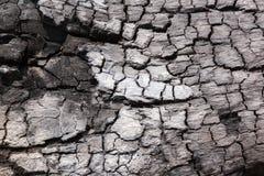 charcoal Robić od drewnianego palenia zdjęcie royalty free