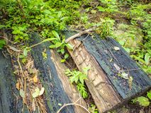 Charcoal beside the walkway to the top of Khao Luang mountain in Ramkhamhaeng National Park,. Sukhothai province Thailand stock photos