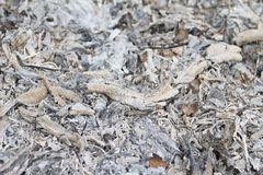 Charcoal in wood ashes Royalty Free Stock Image