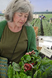 chard αγορές αγοράς αγροτών Στοκ Εικόνα