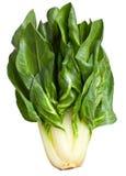 Chard φυτό Στοκ Εικόνα
