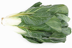 Chard. Isolated chard on a white background royalty free stock photography