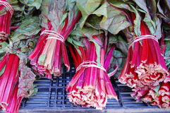 Chard. Bundles of fresh Swiss chard, also called red chard, for sale in the market stock photography