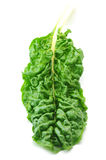Chard. (Collards, Greens, Kale, Mustards, Spinach) isolated on the white royalty free stock photography