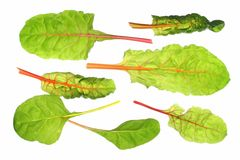 Chard (Beta vulgaris) Stock Photos