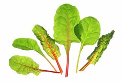 Chard (Beta vulgaris) Royalty Free Stock Photo