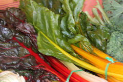 Chard, Beta vulgaris var. cicla Stock Photo