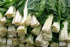 Chard Royalty Free Stock Photos