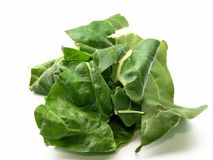 Chard leaves Stock Images