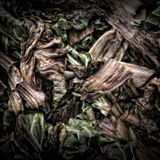 Chard Leaves on a Compost Heap. /Artistically alienated to create a grungy somber atmosphere Royalty Free Stock Images