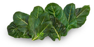 Chard leaves Royalty Free Stock Images