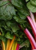 chard organicznie kolorowy Fotografia Stock