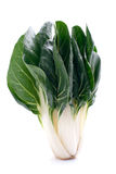 Chard plant Royalty Free Stock Photo
