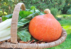 Chard and pumpkins in a basket Stock Photos