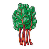 Chard - ręka rysujący warzywo odizolowywający Zdjęcia Royalty Free