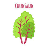 Chard salad, leaf of swiss plant, vegetarian nutrition. Vector illustration. Chard salad, leaf of swiss plant, vegetarian nutrition. Made in cartoon flat style stock illustration