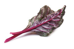 Chard silverbeet, mangold leaves, paths Royalty Free Stock Photos