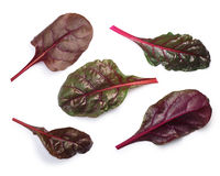 Chard silverbeet, mangold leaves, top view, paths Stock Image